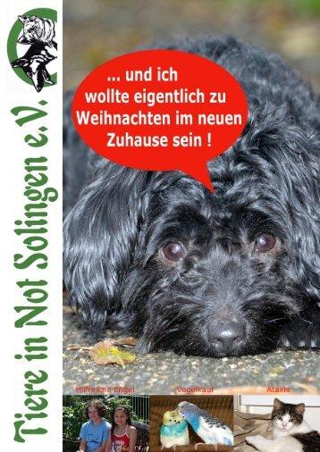 Timon - vom Paniker zum -fast- Traumhund - Tiere in Not Solingen eV
