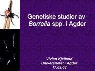 Flåttt forskning i Agder - Arendal kommune