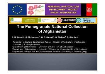 Muhammad Ghous - Presentation.pdf - POMEG-TECH