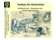 Stallbau für Mutterkühe - Infodienst Landwirtschaft