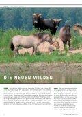die neuen wilden - NRW-Stiftung - Seite 6