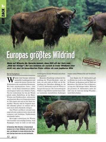 Europas größtes Wildrind