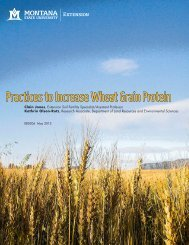 Practices to Increase Wheat Grain Protein - Department of Land ...