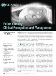 Feline Obesity: Clinical Recognition and Management - VetLearn.com