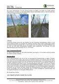 HMT Mai 2009 DEU - Barth-Haas Group - Seite 2