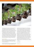 Sector Special Bloembollen (pdf) - Abonneren - Page 4