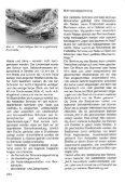 löcker, reschreiter 1997 - Naturhistorisches Museum Wien - Seite 3