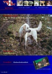 Schwarzbuch Hund - Problemhundtherapie in NRW