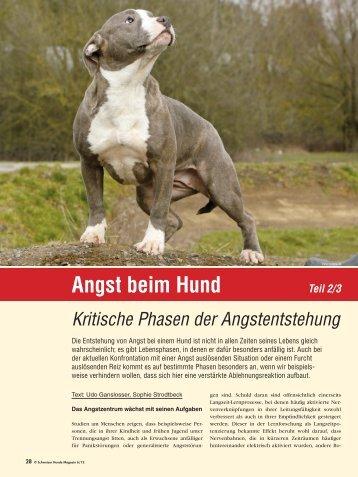 Angst beim Hund Teil 2/3 - Schweizer Hunde Magazin