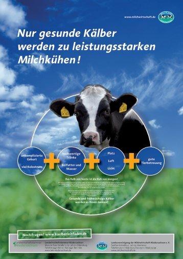 Nur gesunde Kälber werden zu leistungsstarken Milchkühen!