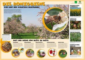 Die Honigbiene Wie lebt der kleine Bestäuber? - Deutscher ...