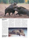 NEU - Jagen Weltweit - Seite 7