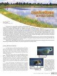 Revista Panorama da AQÜICULTURA Edição 77 maio ... - Matsuda - Page 2
