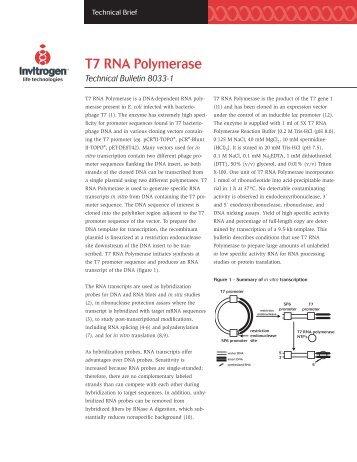 T7 RNA Polymerase - Invitrogen