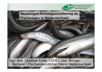 A. Neunaugen-Aufstiegsmonitoring - Wanderfische.de