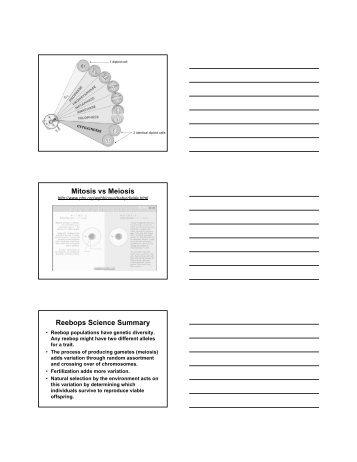 Mitosis Vs Meiosis Card Sort Region 13