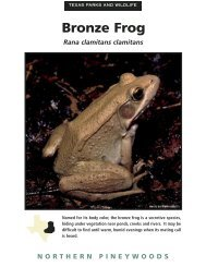 Northern Pineywoods Species Fact Sheet Set - Texas Parks ...