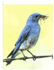Bluebird Days_Montana Quarterly Summer 2012 - Sacajawea