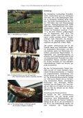 Rohpökelwaren und Rohwurst aus Serbien – Qualität der nach ... - Seite 2