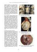 Rohpökelwaren und Rohwurst aus Serbien – Qualität der nach ... - Seite 3