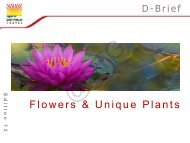 D-Brief Edition 13_Flowers and Unique Plants_small_Security