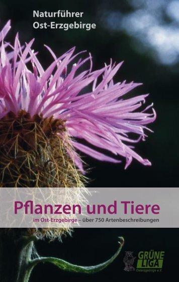 Pflanzen und Tiere 1 - Naturführer Osterzgebirge