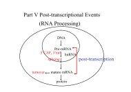 Part V Post-transcriptional Events (RNA Processing)