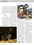 S panien - Jagen Weltweit - Seite 5