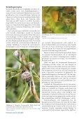 Kronenschäden bei Lärchen in Österreich weit verbreitet - BFW - Seite 5