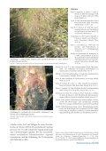 Kronenschäden bei Lärchen in Österreich weit verbreitet - BFW - Seite 6