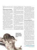 Jau dinozaurų eroje žinduoliai buvo gerai išsivystę - Iliustruotasis ... - Page 5