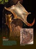Jau dinozaurų eroje žinduoliai buvo gerai išsivystę - Iliustruotasis ... - Page 6