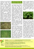 Plant Bulletin - Agri-Food & Veterinary Authority of Singapore - Page 2