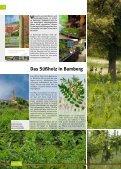 Gärtnerstadt Die - Landesgartenschau Bamberg - Seite 6