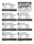 of the Best Angus & Charolais bulls raised in California. - JDA Online - Page 7