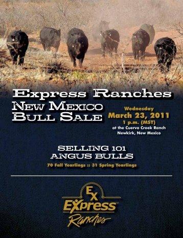 ANGUS Big, Stout Angus Bulls - Express Ranches