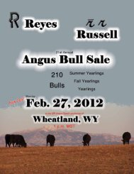 Angus Bull Sale Reyes/Russell - MR Angus Ranch