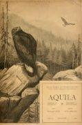 Aquila - http://epa.oszk.hu/01600/01603 - http://www ... - Seite 7