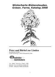 Empress  Züchter Staude Dauerblüher Blüten 12cm Durchmesser Waldrebe Clematis