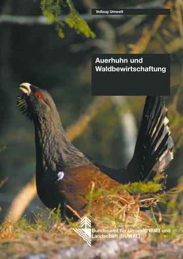 Auerhuhn und Waldbewirtschaftung - Bundesamt für Umwelt ...