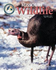 MoWildlife cover - Conservation Federation of Missouri