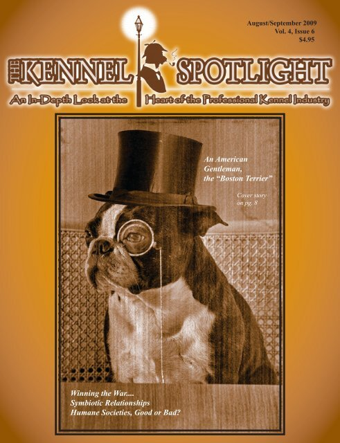 An American Gentleman The Boston Terrier Kennel Spotlight