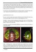 (Anisoptera: Aeshnidae) Milen Marinov - International Dragonfly ... - Page 4