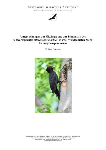 Dryocopus martius - Deutsche Wildtier Stiftung