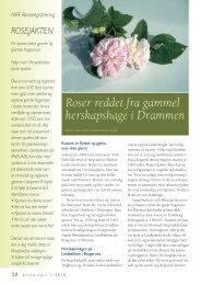 Roser reddet fra gammel herskapshage i ... - Skog og landskap