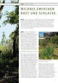 wildnis zwischen rost und schlacke - NRW-Stiftung - Seite 7