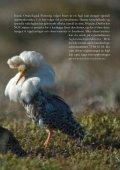 Les mer - Fuglevennen - Page 3