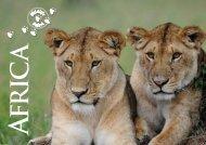 kenya tanzania - Wildlife Safari