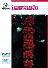 Conserving coffee genetic resources - Bioversity International