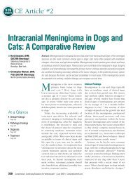 Intracranial Meningioma in Dogs and Cats: A ... - VetLearn.com